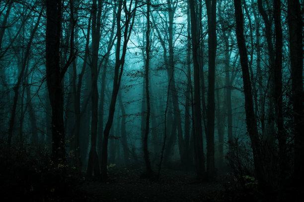 树林秋天自然