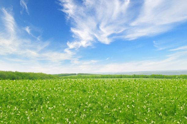 天空田地绿色
