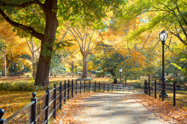 秋天中央公园公园