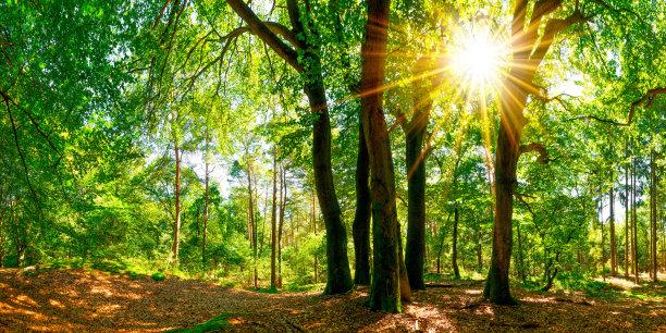 森林自然美水平画幅