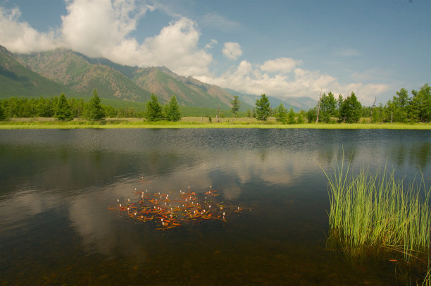 贝加尔湖,森林,泉