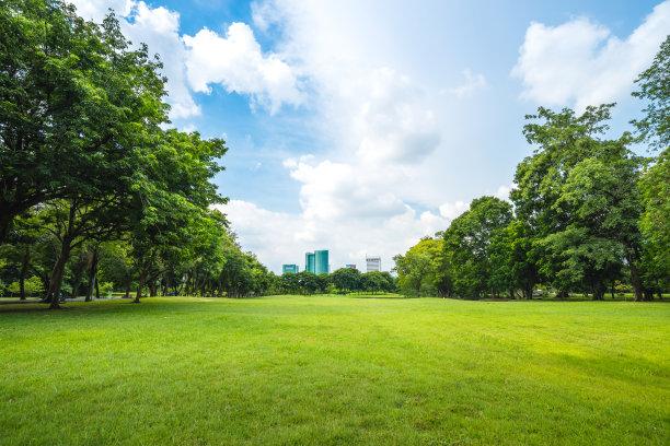 公园的空旷草地