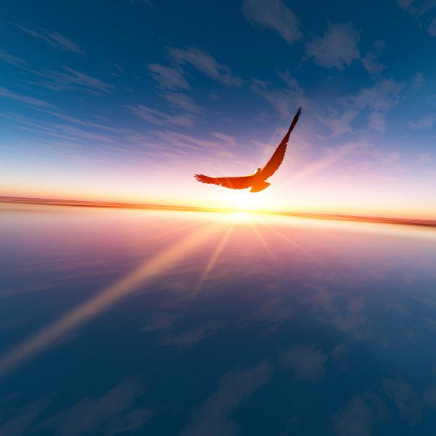 鹰飞跃地平线