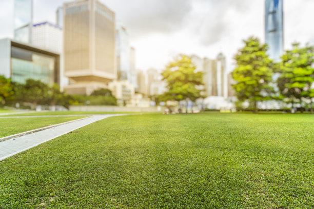 草坪绿色白昼