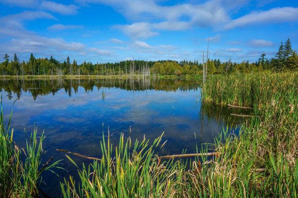 沼泽早晨鹅卵石
