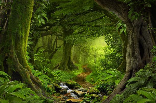 热带雨林鸡尾酒图片