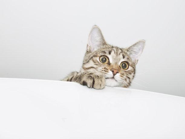震惊的小猫咪