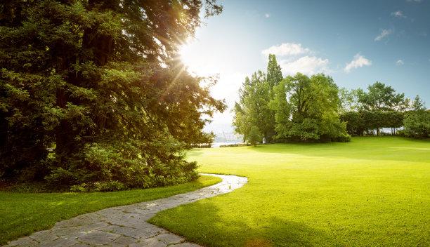 公园,绿色,自然美