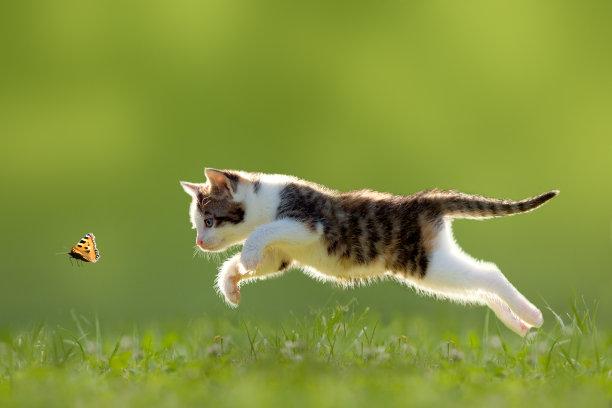 抓蝴蝶的小猫
