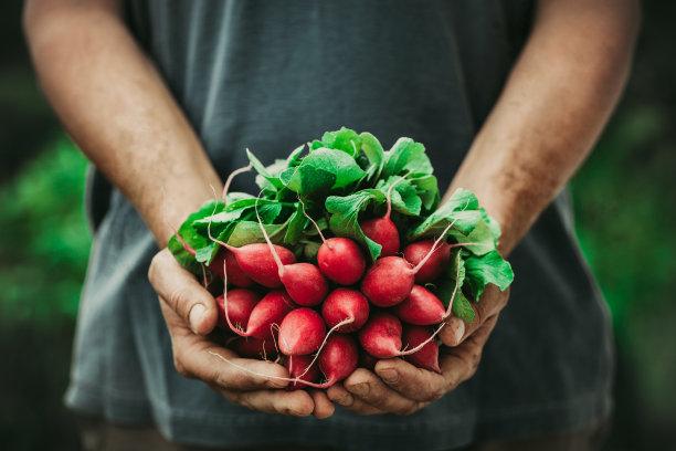 农民蔬菜萝卜