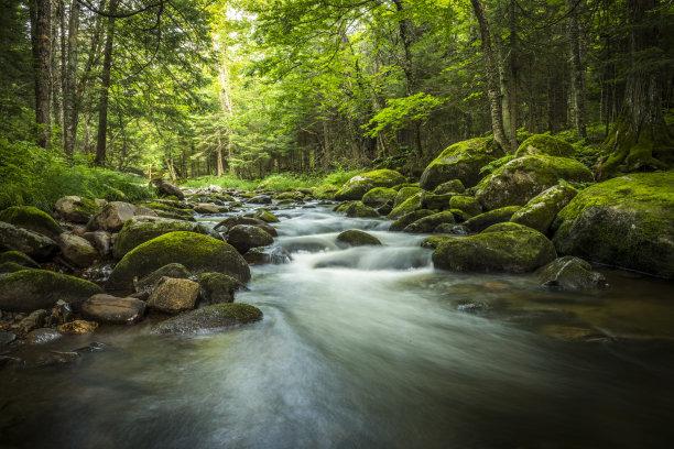 小溪森林绿色