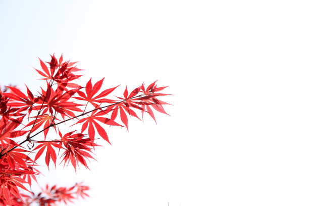叶子秋天红色