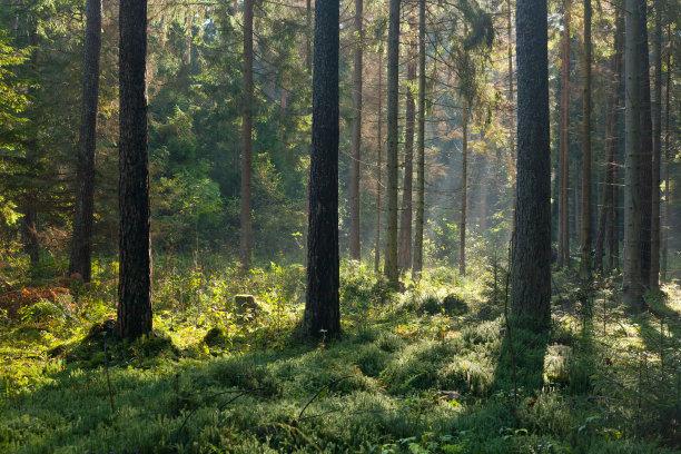 森林阳光光束秋天