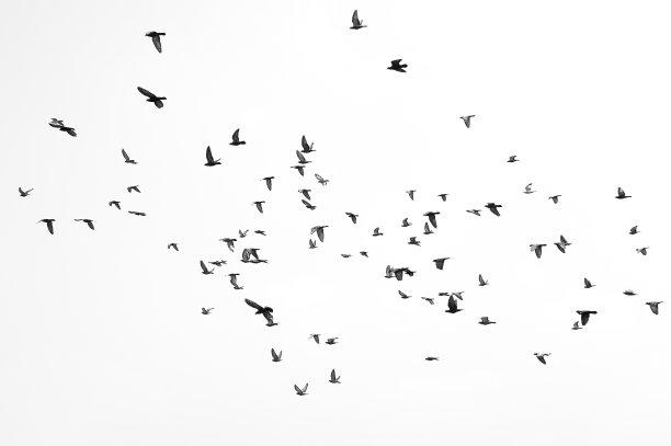 天空中鸟类