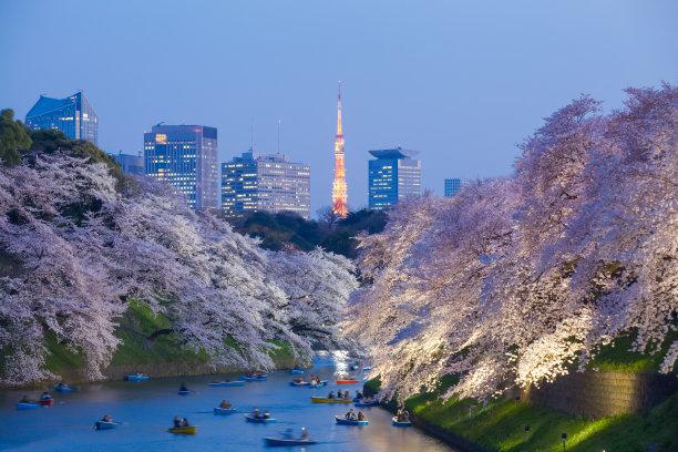 东京塔樱花树
