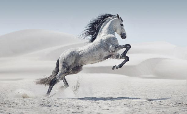 白马照片种马