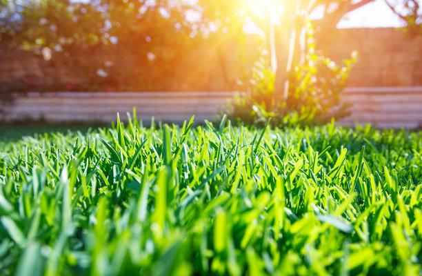 绿色清新草坪