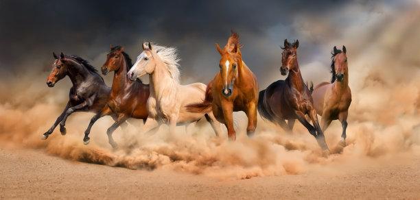 马兽群淡褐色