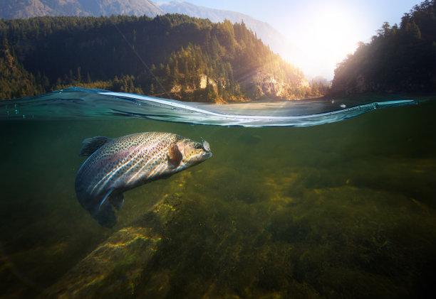 水下鳟鱼简易钓鱼