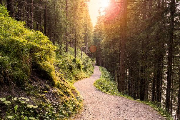 森林路阳光光束