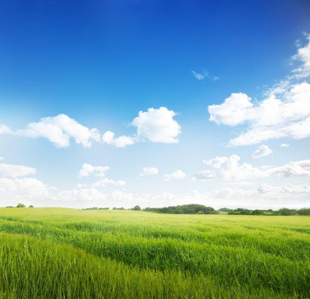 草地的夏天