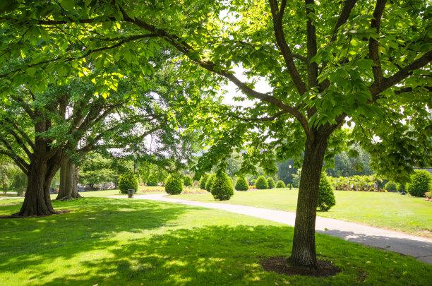 格林公园,波士顿,自然