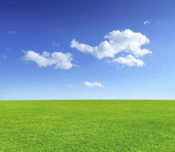 夏天的草地