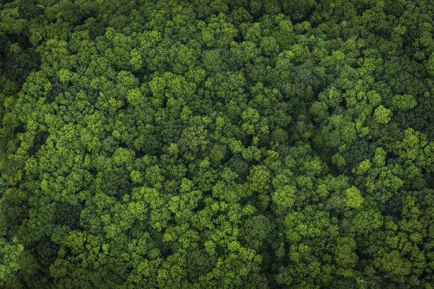 树冠树林森林