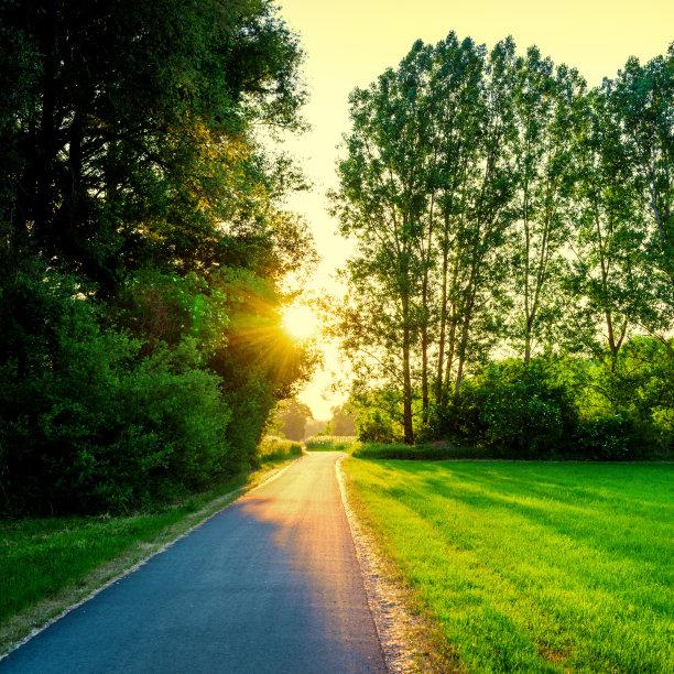 绿色,田地,日光