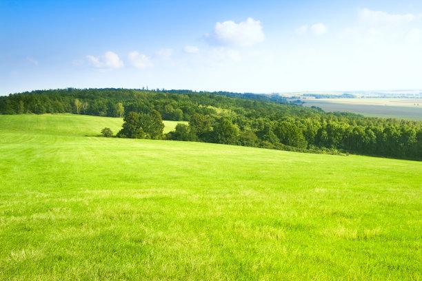 广阔的草地