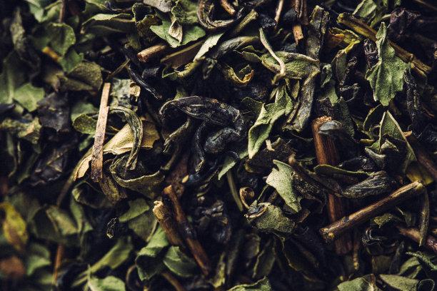 散叶莴苣绿茶