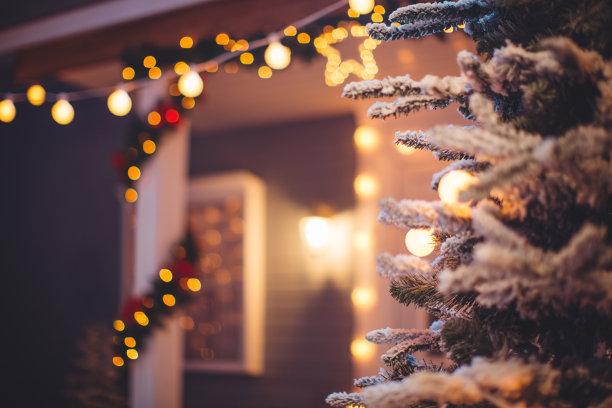 圣诞装饰户外杉树