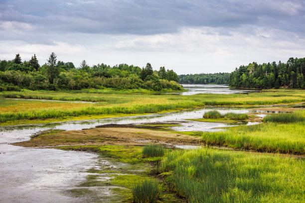 湿地沼泽自然