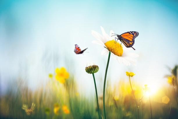 鳞翅类蝴蝶