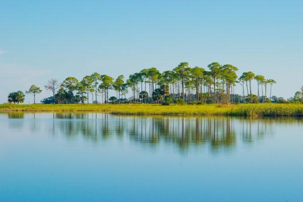 岛圣马克野生动物保护区沼泽
