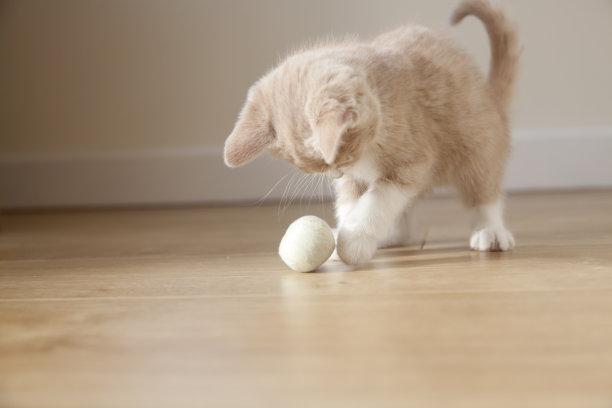 玩毛球的小奶猫