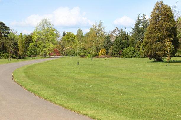 夏天,草,公园