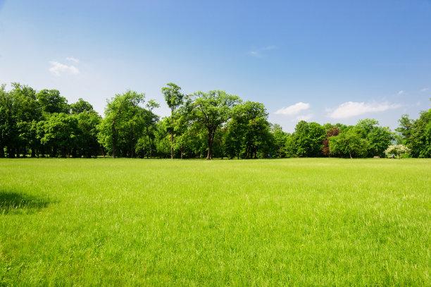 奥地利草坪