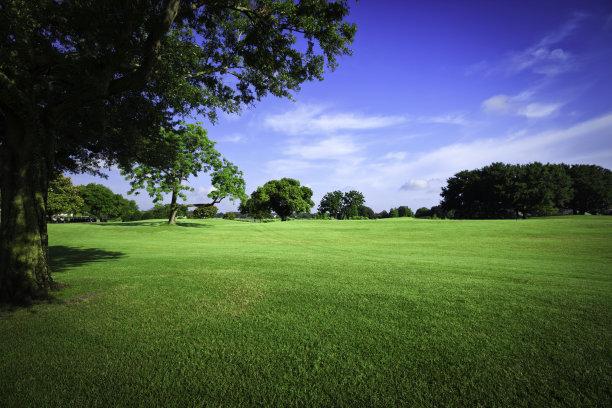 运动场高尔夫球草坪