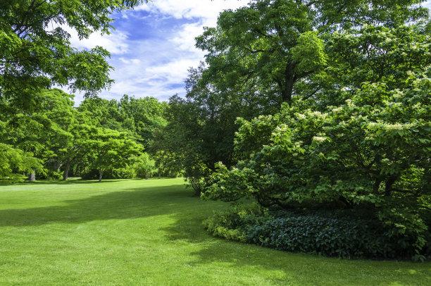 格林公园,花坛,园林