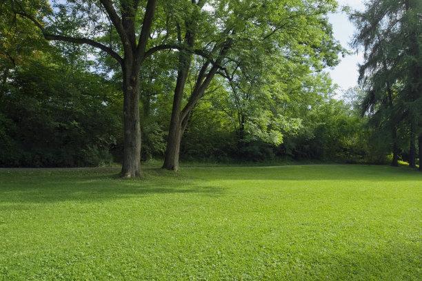 树荫下空荡的草坪