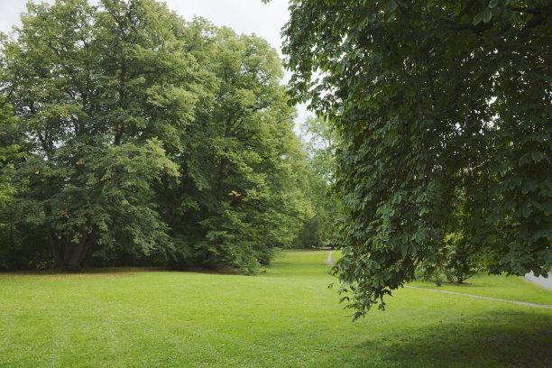 树荫,巨大的,格林公园