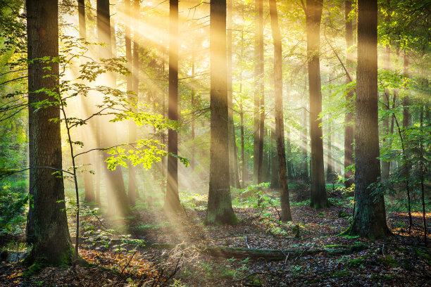 阳光光束森林高动态范围成像