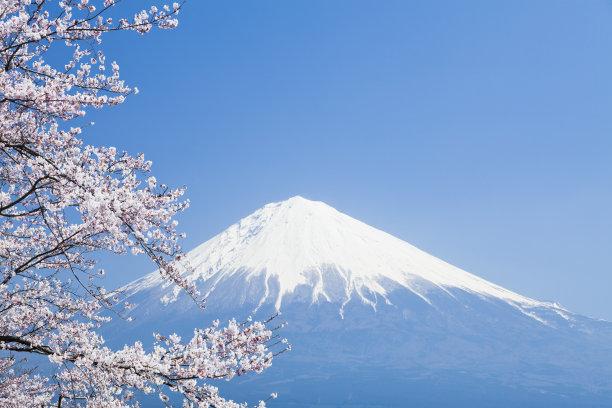 富士山樱桃树樱花