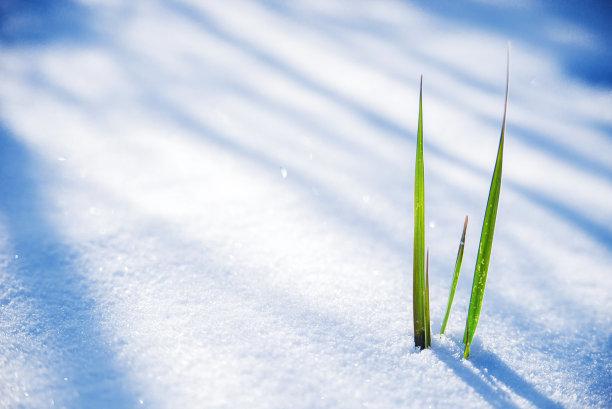 雪草放气的
