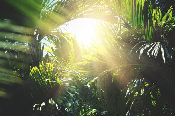 树丛中的一缕阳光