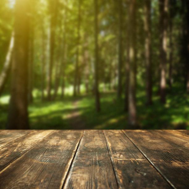 森林散焦夏天