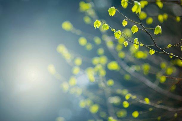 春天的叶子