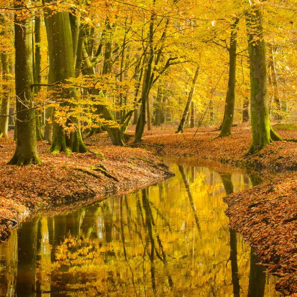 山毛榉树小溪秋天