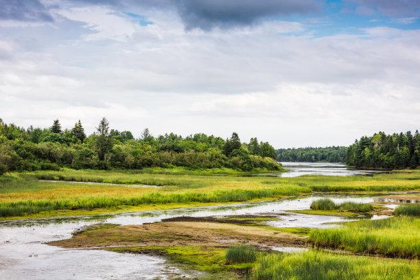 湿地沼泽咸水湖